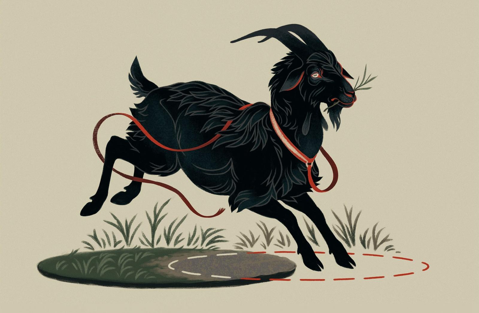 После столетий поисков получено точное решение задачи о козе на привязи - 1