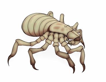 Клещи или статья о том, как стать самым успешным маленьким паукообразным - 10