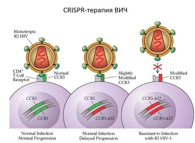 CRISPR для чайников, или Краткая справка по быстрому редактированию ДНК - 18