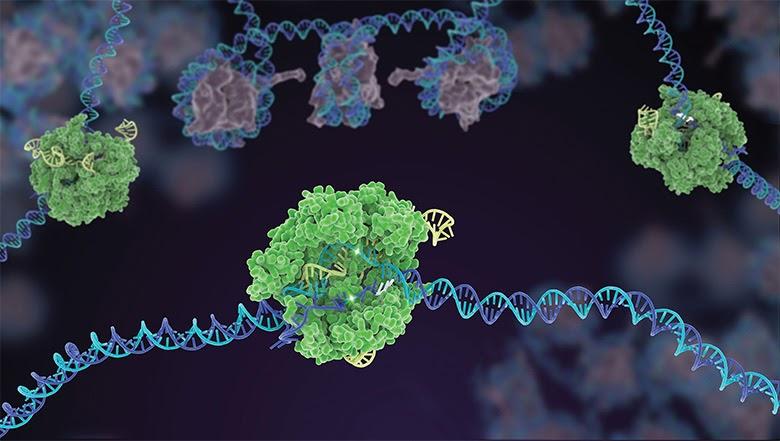 Резка молекулы ДНК с помощью CRISPR-Cas9 (рис. Джанет Иваса)