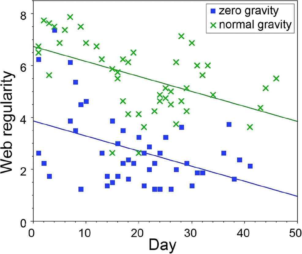 Пауки на МКС: как гравитация влияет на строительство паутины - 11