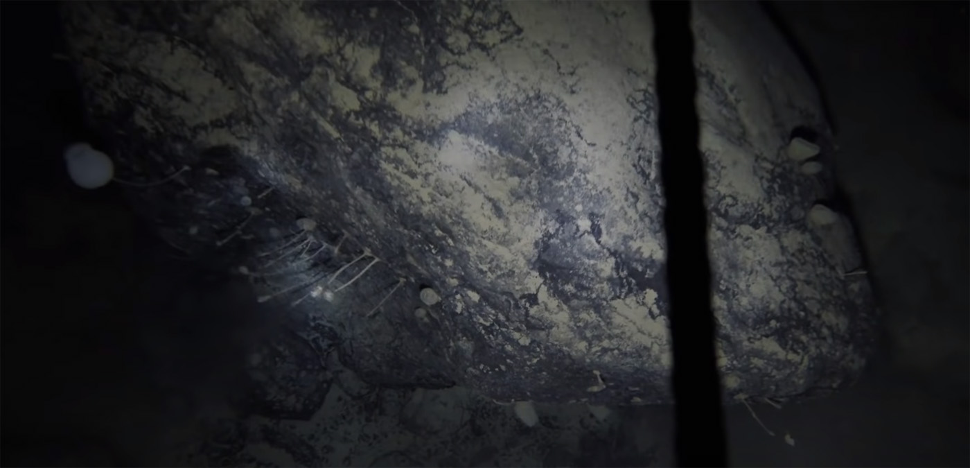 Ученые случайно обнаружили колонию странных существ подо льдом Антарктиды - 1