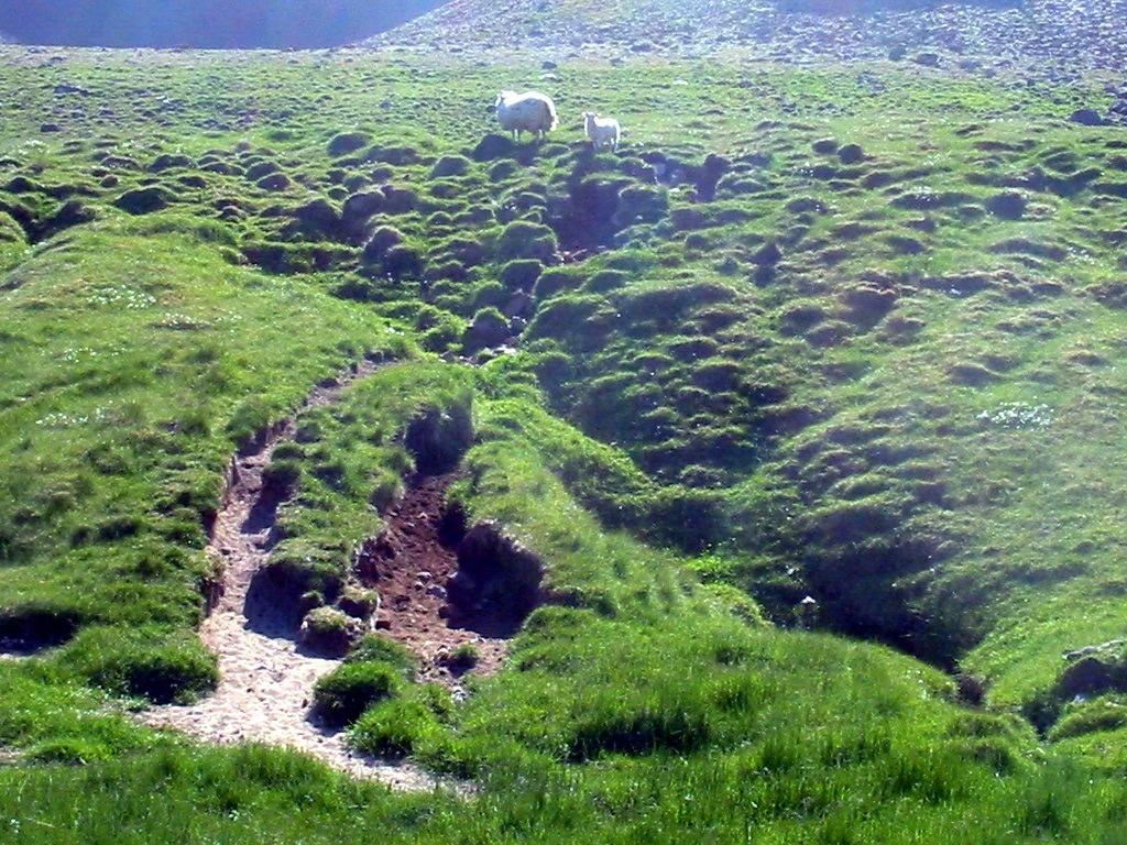 Типичный ландшафт равнин в Исландии сегодня. Тонкий плодородный слой частично поврежден осадками, частично приподнят замерзшими грунтовыми водами и осадками. Да-да, тот самый пасторальный исландский пейзаж – такой же признак экологической катастрофы, как и условный «Рыжий лес», как бы нельзя было их сравнивать