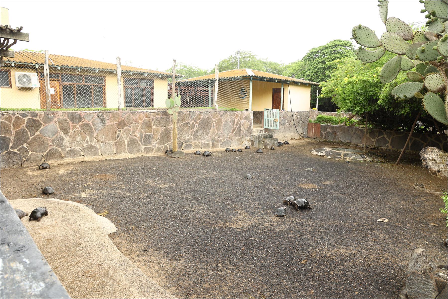 Реинжиниринг небольшой островной экосистемы: биолаборатория на Галапагосах - 10