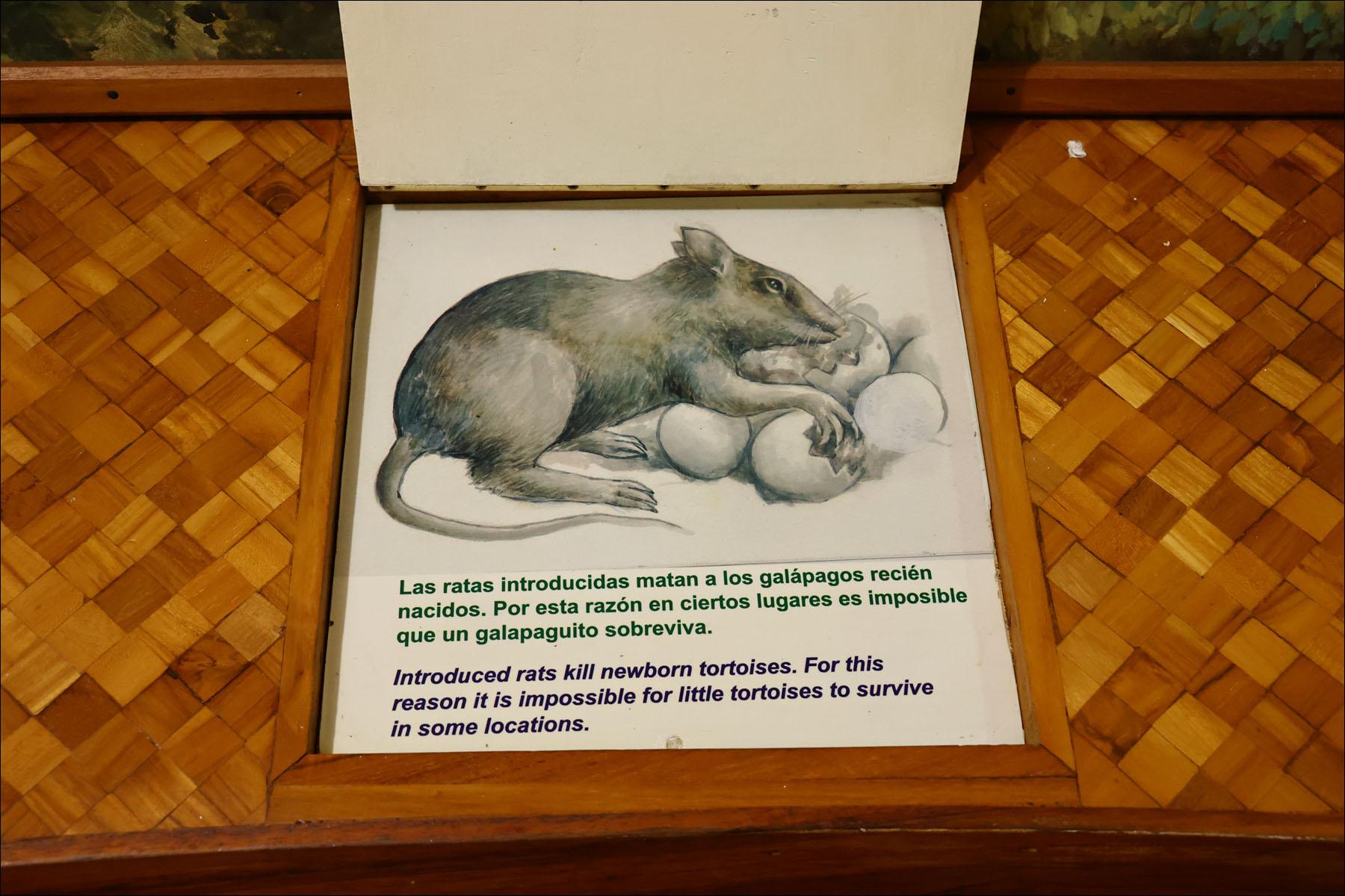Реинжиниринг небольшой островной экосистемы: биолаборатория на Галапагосах - 4