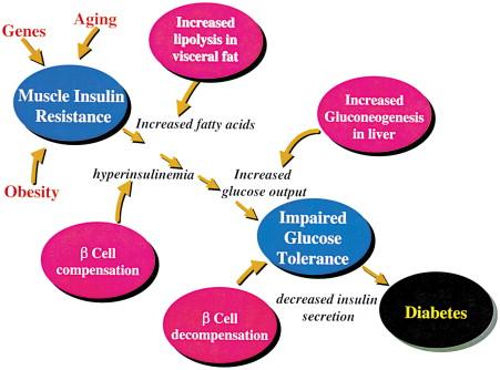 Новая концепция диабета 2 типа: опасный, но обратимый - 2