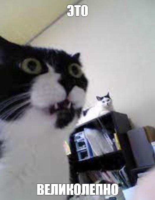 «Котовий брызгатрон» — или боевая турель против кота ^_^ - 14