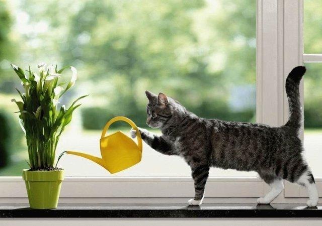 «Котовий брызгатрон» — или боевая турель против кота ^_^ - 1