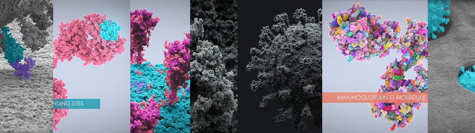 Молекулярная биология. Houdini. NVIDIA 3080. Коронавирус vs иммуноглобулины - 1