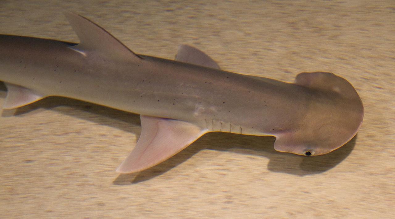 Физика в мире животных: как акулы ориентируются при помощи магнитного поля Земли - 2