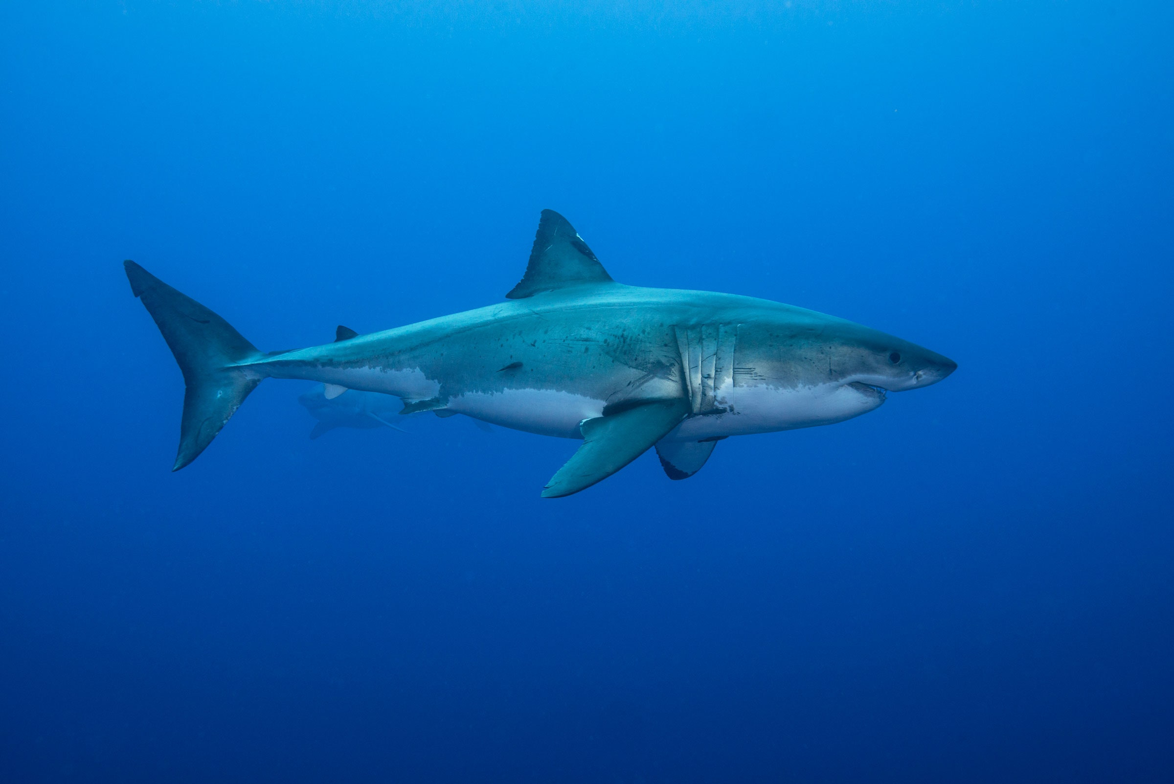 Физика в мире животных: как акулы ориентируются при помощи магнитного поля Земли - 1