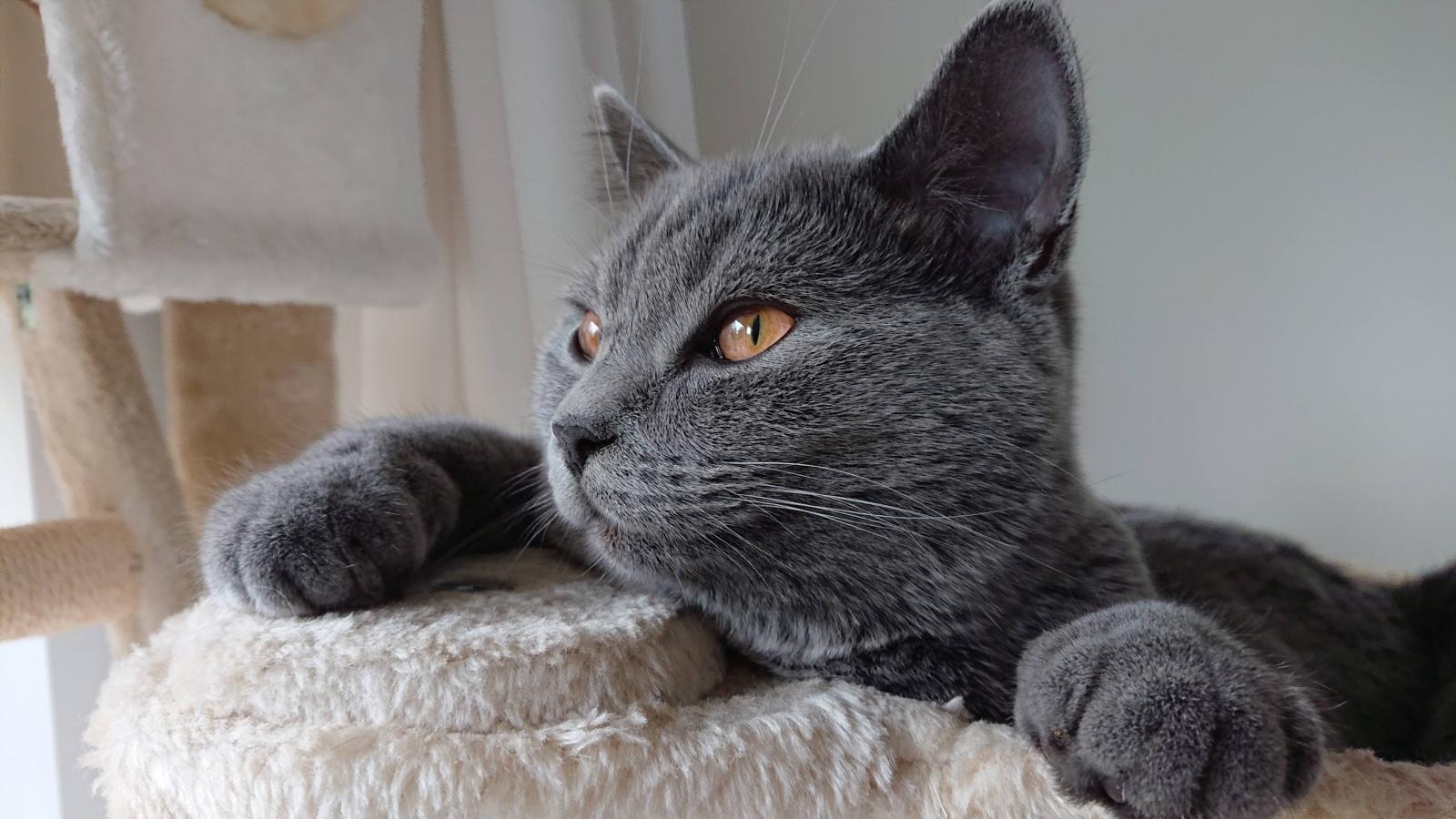 Эскобар - британский голубой кот, который своё имя оправдывает полностью. Способен находить лазейки и убегать практически из любых ситуаций.