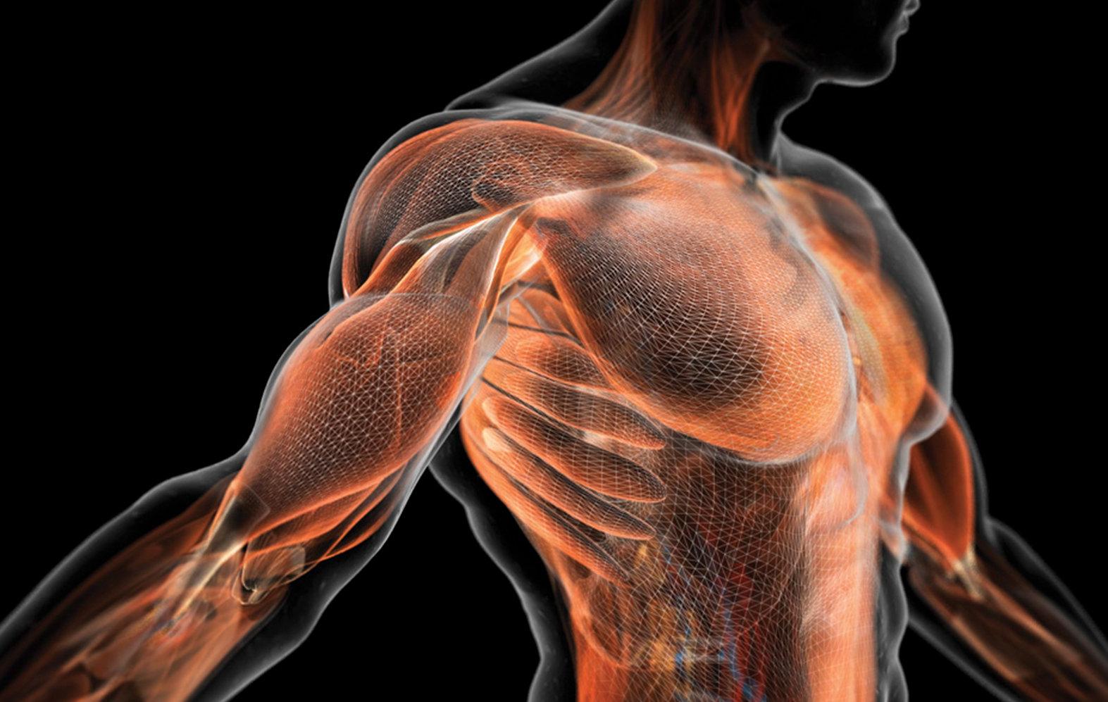 Лучшее компьютерное кресло: табурет и здоровые мышцы спины - 1