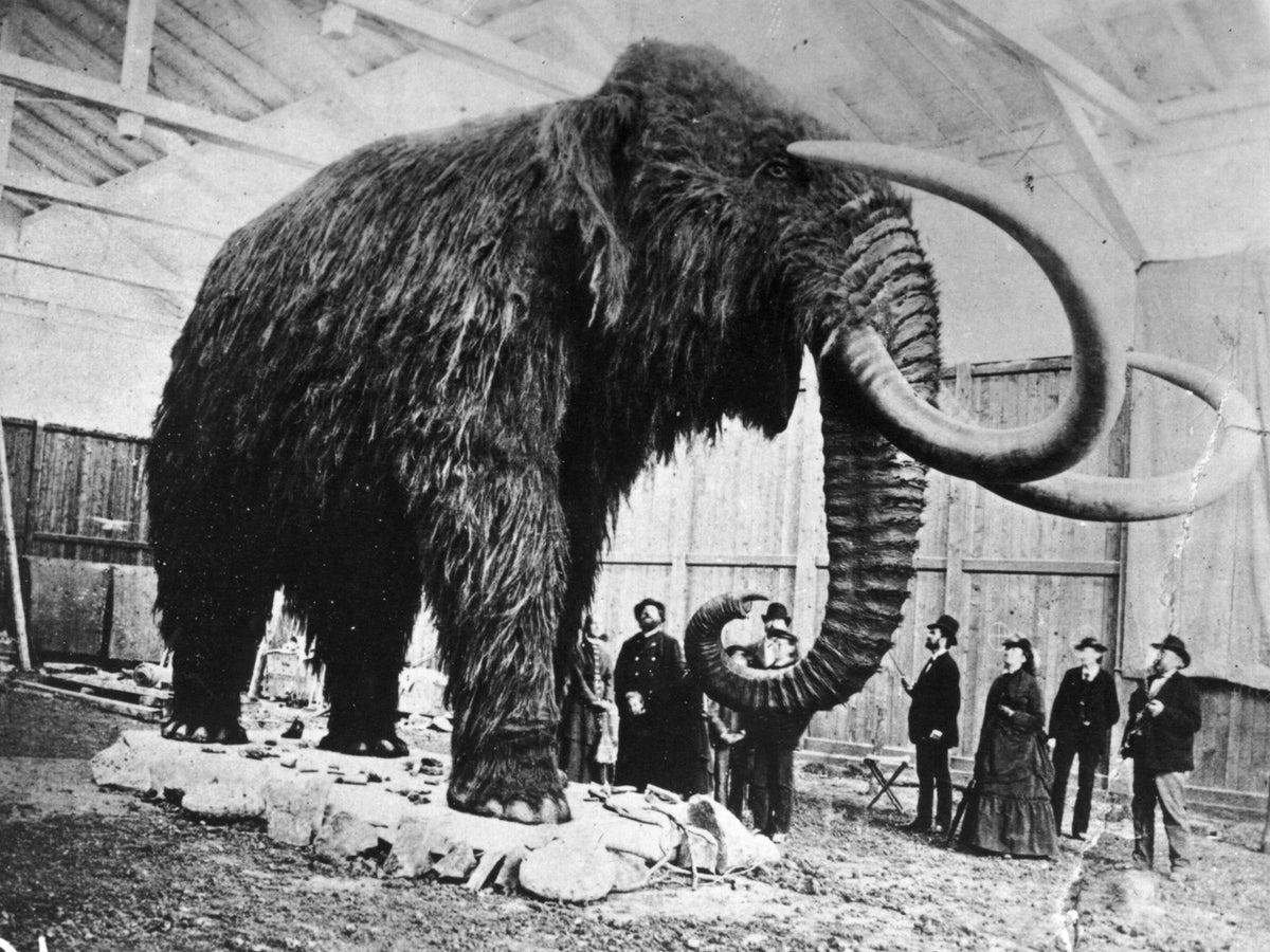 Как в России пытаются воскресить мамонта - 15