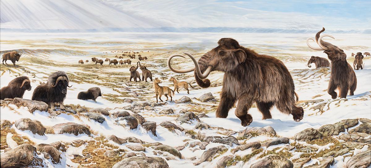 Как в России пытаются воскресить мамонта - 16
