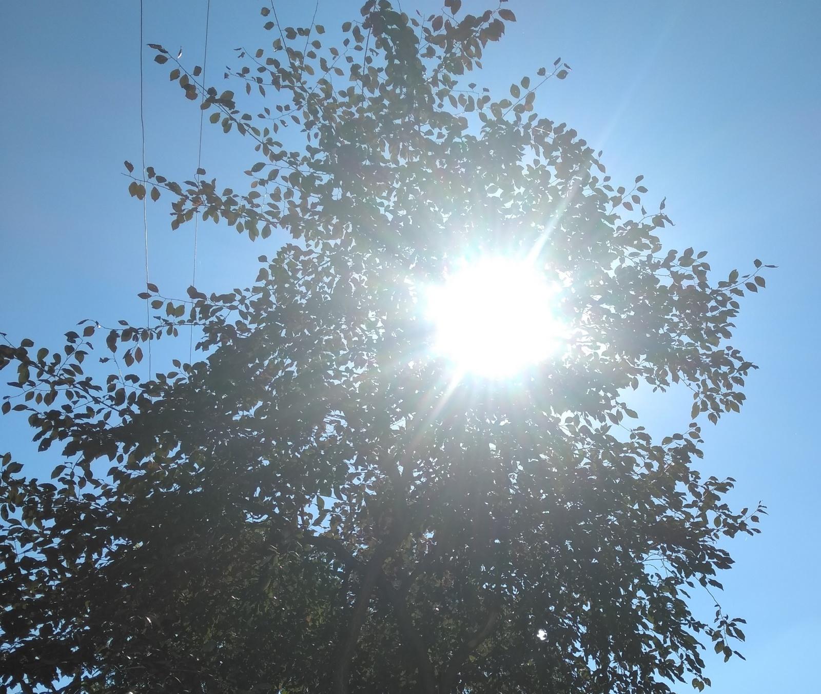 Внутри яркого круга тоже есть ветки и листья, но их не видно