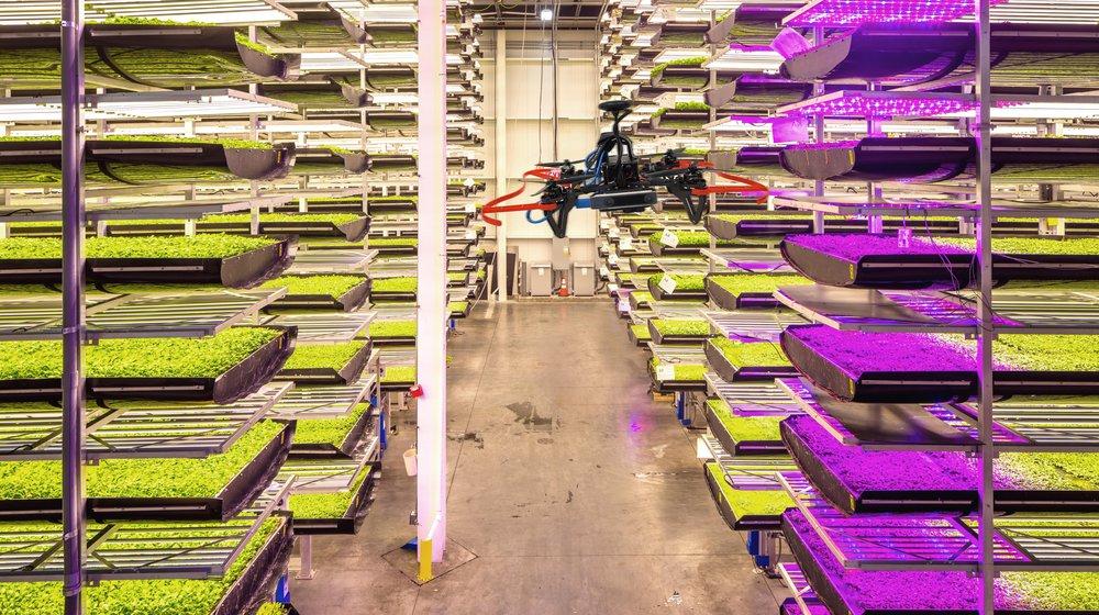 Культивируй это: как высокие технологии помогают выращивать еду на примере трех необычных проектов - 2