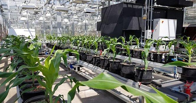 Культивируй это: как высокие технологии помогают выращивать еду на примере трех необычных проектов - 4