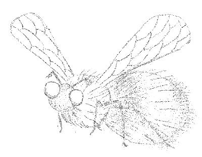 FlyBugFly. В поисках фичи