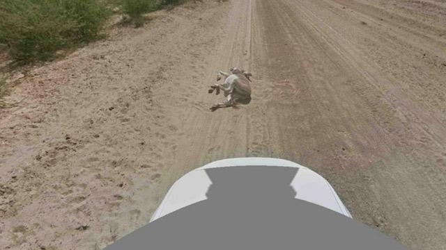 Google доказывает, что не убивала ослика в Ботсване