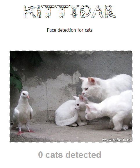 Kittydar: кошачий детектор
