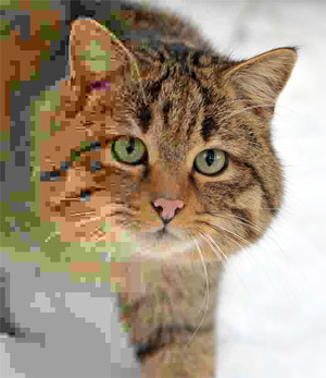 Mozilla оптимизирует формат JPEG