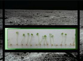 NASA планирует послать на Луну живые растения в 2015 году в рамках программы Lunar X Prize от Google