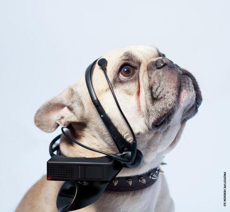 No More Woof: переводчик с собачьего на человечий