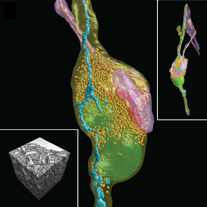 The Human Brain Project: откуда мы знаем, как устроен мозг?