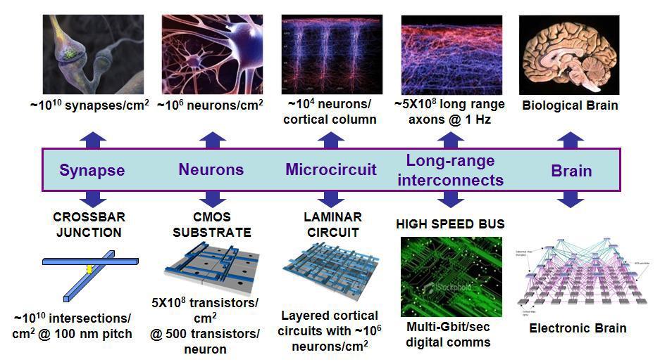 The Human Brain Project: Вы спрашивали – мы отвечаем
