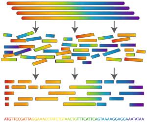 Биоинформатика: взгляд изнутри