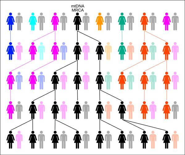 Через 3000 лет у всех людей будет общий предок, живущий сегодня