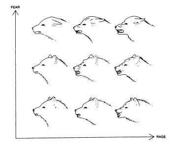 Диаграммы и графики: осмысляя Тафти