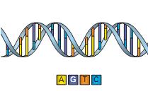 Биоинформатика / Алгоритмы в биоинформатике ч.1
