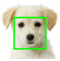 Компьютерное зрение помогает искать потерявшихся собак