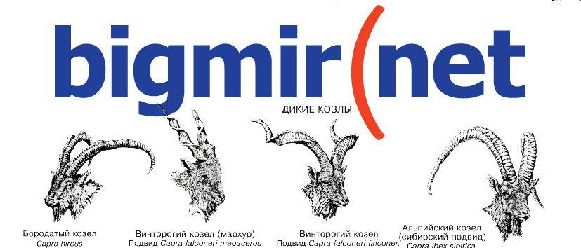 bigmir(net