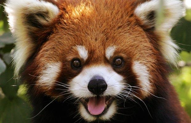 Методы анонимности в сети. Часть 3. Firefox