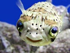 На пути к Skein: просто и понятно про Blowfish