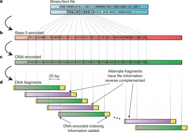 Надёжное хранение информации в ДНК (2,2 петабайта на грамм)