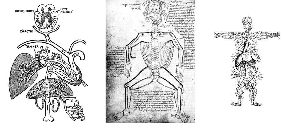 Научная, медицинская иллюстрация и анимация: как врачам и ученым общаться друг с другом, студентами и остальным человечеством