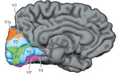 Нейробиология и искусственный интеллект: часть вторая – интеллект и представление информации в мозгу