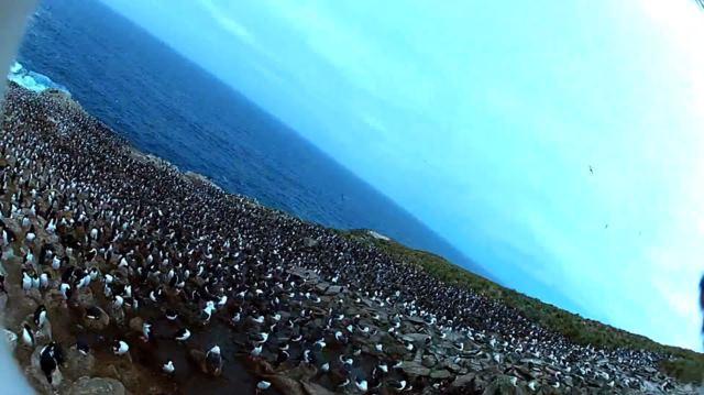 Птица украла камеру, проведя аэрофотосъемку колонии пингвинов