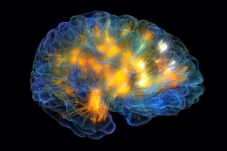 Работа мозга в режиме реального времени: видео