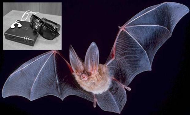 Разработка израильских ученых позволит слепым «видеть» как летучие мыши