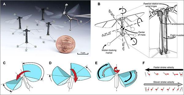 Искусственная «пчела» взлетает вертикально, зависает в одной точке и движется горизонтально