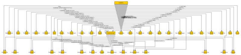 Систематика прокариот — детализированные пояснения
