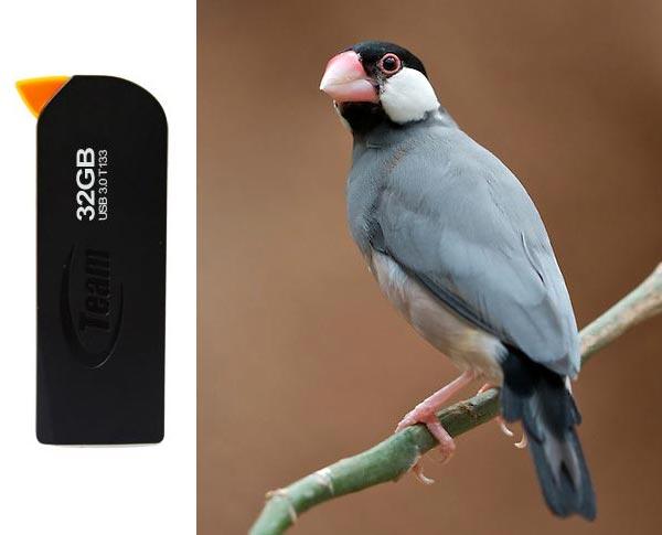Накопитель Team T133 Java Sparrow UFD оснащен интерфейсом USB 3.0