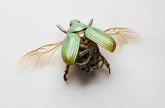 Стимпанк коллекция жуков Линдси Бессанон