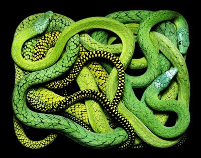 Учимся писать многопоточные и многопроцессные приложения на Python