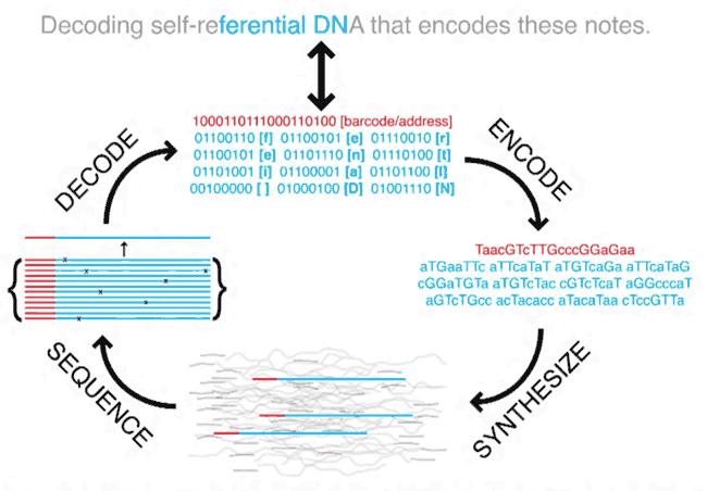 Учёные из Гарварда записали 643 килобайта данных в молекулу ДНК